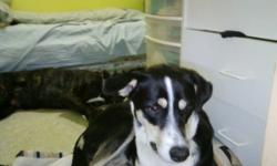 i have a Femaile dog boren July 1/2010 her name is CUDDLES she is black and white with a little bit of brown, need a good home with a back yard to run around, please contact us at (807)630-0565 or (807) 630-2968 *hailey & AJ
