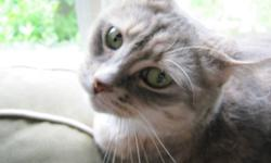 Looking for a loving home for our 3 yr old cat. Her name is Cleo. She is a beautiful light colored tabby. She MUST be kept as an indoor cat, cause she is declawed. She is also fixed.   We are very sad to see her go, but we have discovered allergies with