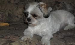 Very friendly female Shih Tzu her name is Tinkerbell and she's 1 yrs old and about 12 pounds. Loves people and is also really good with kids. Looking to go to a loving home, where she will get lots of attention. We would love to keep her but we are not