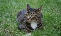 Gray-white 6 yr old tabby , very friendly. We are moving and can not take her with us. Needs a good caring home. 1 month of supplies (food,litter) free. Although the pictures are on the lawn , sunbathing :) ,  SHE IS AN INDOOR CAT.