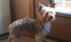Please conact my mom: embanks@xplornet.com Our house number is 780-539-7919 Marlie is a 3 year old female Yorkie, she is a loving, affection dog. She is playful. She has been around children, and is timid around loud noise. Marlie has mothered one puppy