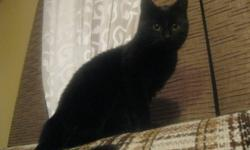 Casper is a male black cat! he is very loving and affectionate.... he is good with other cats and good with dogs. he does come with his litter box, food, toys, litter, etc. Casper is litter train. he is a outside or indoor cat. if you would like to know