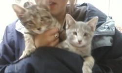 I have 2 kittens, Cute as buttons, needing homes by Monday the 3rd (of oct) The boy one is the Brown one The gray one is the girl.. FREEEEE kittens, So please take one, E-mail me at leezinc@hotmail.com if your interested.