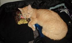 I have a 4 year old orange female tabby named Carmen free to good home.(fixed) Just recently I started letting her go outside, and I found she has a talent for catching and killing mice. She'd be perfect in a home with a rodent problem, even a country