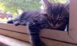 Free 7 week old kitten It will be ready in one week This ad was posted with the Kijiji Classifieds app.