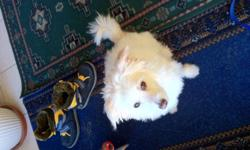 unable to care for dog much longer, many family disasters and moving out of country. Don't have much time for dog, but he loves to play and is very very loving, he needs a home with kids and is well mannered He shades very little, and seems to be