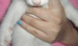I currently have two male kittens that need loving homes to go to.  The one is white with a grey spot on his head with a playful personality.  He has sad eyes, but it only adds to his charm.  The other one is all black, and extremely docile.  He will let