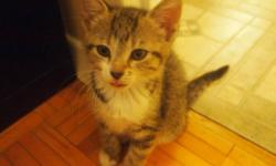 I have 4 kittens that are old enough for new homes, and as much as i would love to keep everyone of them we all know they get to big too fast. i just moved to Oshawa and am in an apartment now but that wont matter at all as you can just bring your carrier