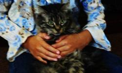 Free cat Must Go ASAP! my daughter who is a newborn is allergic to cats, so i have to get rid of my cat. Her Name is Princess, She is a Female, and is Persian/Tabby email if intrested, and ill tell you more