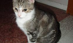 Bailey's is a very loving indoor female cat looking for a new home.  She is about 5 years old and has not been spayed. she is tiny and looks like she's only a year or two.  Not sure of her actual birth date, but had to put something down for the ad.  She
