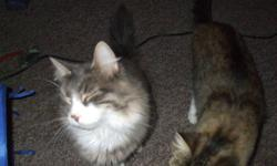 two cats, must go together brother and sister they are like two peas in a pod. you get the cats, litter box, food dishes, everything that belongs to them      one male ( Sketch ) is broken, or fixed as some call it.   one female ( Lela ) is not