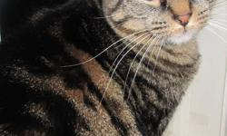 Two friendly adult female cats for free Molly - Grey Ariel - Black & grey Both declawed & neutered