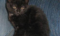 I have a litter of 3 very cute kittens! We have 2 girls and 1 boy, they are all black. They are ready to go anytime! Free to good homes. If you have any questions call 403 335 2271