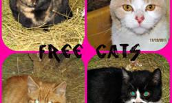 Free farm cats to go to a good farm! -Great mousers -many colors -all ages -polydactyl (extra toes) - eat hard food -don't have shots or fixed/spayed -get along with other pets & childern -Can survive Outdoors, and cold winters email me back if
