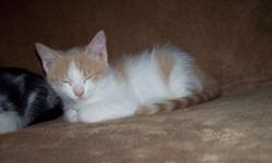 Adorable kitten needs a good home to play in