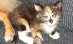 i have 2 kittens left that are not called for 1 is ready to go now and the other i am looking for someone to put a hold on her, if u are interested please send me an email   thanks kristina