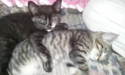 Looking to give 4 kittens out to good homes.  These little guys and girls are adorable, litter trained and ready to go!  Please call Jennifer @ (250) 215-7293.