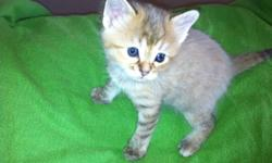 Have 4 kittens very unique markings on two and two orange almost white house trained and very good with dogs and kids will meet half way for delivery may even deliver whole way if within reason This ad was posted with the Kijiji Classifieds app.