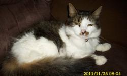 Fluffy is a sweet cuddly cat who loves to be cuddled and loved. Fluffy is also spayed/fixed. She is okay with pets, but much rather's to be alone. Likes to plays every now and than. She is very clean. She can be an indoor or/and outdoor cat. At the moment
