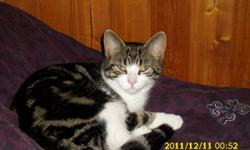 Tigger is a loving, silly little cat. She is Litter trained. Loves to play a lot. She is a indoor/outdoor cat, and likes other pets especially small dogs. Like gone soon.