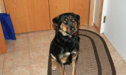 1 1/2 year old female Rottweiler cross. Very Friendly, House Broken, some basic training. Great with children.  Included, Bowls, Some Food and Toys Call 204-759-2724 Shoal Lake, MB