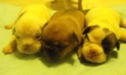 hi    i have 6 french bull dog pups for sale , i am taking deposits on the m right now the white female is sold already there is 3 boys and three girls the first three are the girls and the last three are the boys they will be ready for there new home on