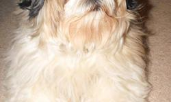 6 year old spayed Shih Tzu:  She is an excellent  family pet in every way except that she barks whenever our baby girl cries (which is a lot, lol).  She is perfectly house trained, calm and well mannered.  She is also very loving, friendly and gentle with