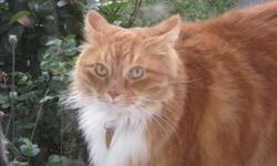 I am moving and I cannot take my cats with me so I need to find them a home were they can be loved. Garfeild is a 6year old orange tom cat who has been loved since he was a kitten very friendly he weighs 20lbs+ so quite large. Loves to be pet and given