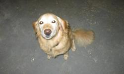 50lb 5yrs old female spayed Golden Retriever. Friendly and active. Does well with other dogs and kids. Housetrained, all shots up to date, and responds to basic commands. $300 firm (to cover cost of spaying and shots) Selling on behalf of family how can't