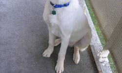 Excellent Puppy & Great Temperment 5 months Old/male 55 lb Great with kittens/cat children/people Has had all needles & tags Vet Papers House trained Basic training Comes with teething toys & food Needs a house with fenced in backyard Come  meet him &