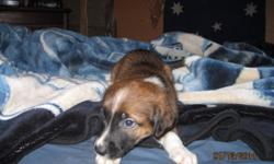 Hi I am offering 6 puppies to go to forever homes these will be a medium size dogs more info call us