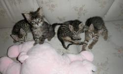 The mon was run over by a truck on the highway, they were orphans from about 1 week old.  A friend ask me to raise them otherwise they would die.  I gave them a second chance in life. Now I  am asking you to help me find a loving home for them.  They are