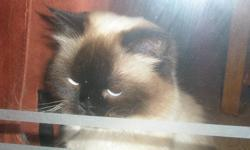female born April 17, 2011 Male born March 28, 2011   2 himalayan cats for sale, $150.00 each.   Single mom, working causally, can no longer afford them. They need flea treatment.   Very beautiful, loving cats, (Paris and Charlie).   Please call 519