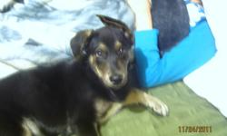 Rocky is my playful and loving puppy that I have to part with due to my current living situation.He has a lot of energy and loves to play. Rocky is gentle and has been around children and other animals.   If you have interest in Rocky please send me an