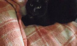 This jet black teenaged cat named Jasmine came to us from an unthinkable situation where she and her identical mother Yokomo, were living in squalor in a low-cost rental apartment. Now that she?s had a few months in a quiet foster home with a patient