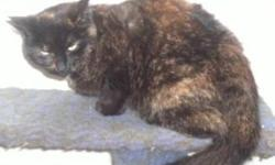 Katie is a spade Female Tortie Shell.,  But we cannot keep her, Comes with a bag of cat food. Shes so lovely :) She needs a home ASAP E-mail me at Leezinc@hotmail.com for more details.