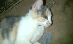 VERY LOVABLE KITTEN NEEDS LOTS OF LOVE LAST ONE LEFT ONLY CALL AFTER 5PM CARRIE