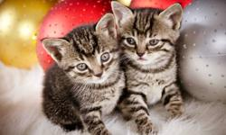 Cute kittens to give away for free. Call Sam 780-750-6116