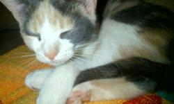MUST GO TO A GOOD HOME MALE KITTEN VERY LOVABLE CALL ONLY AFTER 5PM AND ASK FOR CARRIE THANK YOU