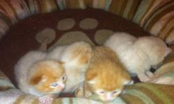 I have 4 adorable kittens. All 4 are male. They were born on the 1st of september and are ready to go now... Completley litter box trained. If you see this add at least one kitten is still available. Please only serious inquiries. This ad was posted with