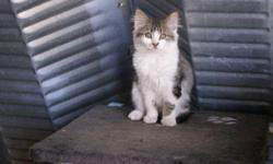 4 kittens to give away, they are almost 4 months and very friendly, all males, we dont have a picture of one of them, but it is coming soon,They are farm cats but have been inside the house a couple times, would make wonderful mousers, They all love