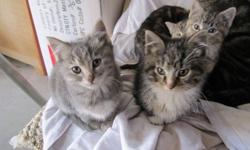 We have 6 adorable kittens to give away. 2 mals and 4 females. They are six weeks old, litter trained, good with dogs and children and just love attention and to cuddle. Please email or phone us for more info or pictures. Ask for anita.