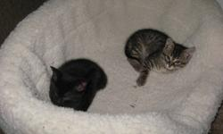 We have 2 beautiful kittens to give away to wonderful homes. There are 2 boys. They are about a month and half old. They are very energetic and loving. They have been around kids and are as good as kittens can be. They are litter trained and are eating