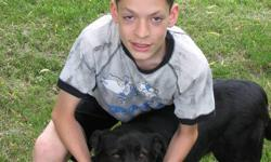 We found this abandoned dog (Shadow) in 2006 and have taken her in as our pet since then. Recently we moved, and unfortunately are not able to house her any longer. Shadow is a black, medium-sized, friendly, energetic, six-year-old female dog. She is