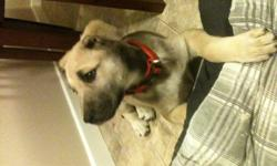 Hello im selling my female pup that i wanted for Christmas sad to say.   $400 or best offer   Im going to be working full time starting Jan 3, 2011 and my wife will be starting school. We will not be able to be here for her.Shes very calm and is such a