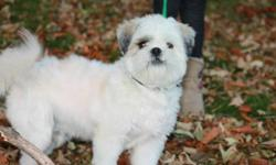 "Very cute Lhasa Apso looking for a new home! ""Patches""is 8months old, house broken and all needles are up to date! Great with children and other dogs."