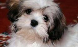 Looking for a girl Lhasa Apso/Maltese mix puppy ready to go for Feb 1st or later. Looking to put deposit on right away for Christmas. Please contact if you have pups born and willing to have me pick one and place deposit. Thank you Bonnie 995-3750 This ad