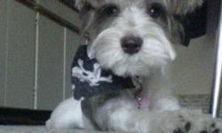 I searched through Kijiji's ads and couldn't find a single ad about Schnauzer dogs so I thought I would make a want ad. I have a 10 month old Toy Schnauzer that weighs about 9 pounds and is very friendly.. We are looking for a second Schnauzer as her