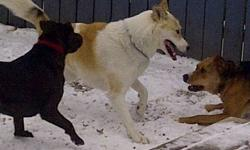 I am currently fostering Toki as her family moved to Ottawa and were unable to take her with them.  She is very gentle and calm and loves to play with children and other dogs.  She is also very obedient and is house and leash-trained.  She is spayed,