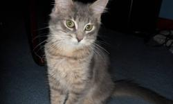 Hey there, I have a grey tabby kitten looking for a loving home. She is about 2 months old & she is very friendly, good around people, and also other animals. She needs a bigger place where she can run around and play. Please if you are interested in her